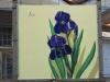 06_iris